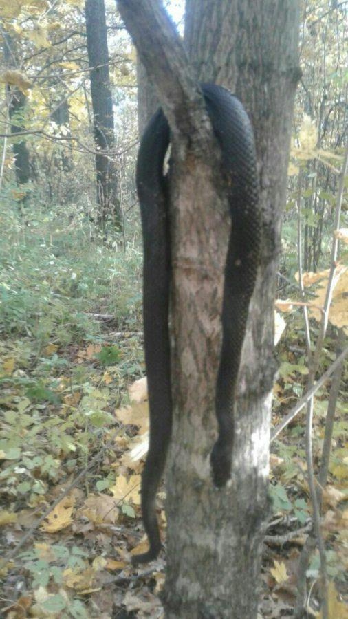 Чистополец пошел в лес за грибами и наткнулся на змей (фото)