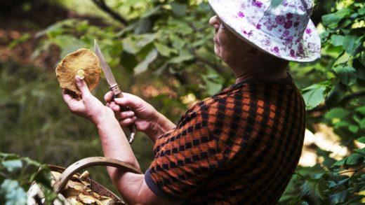 На ягоды и грибы введут новый побор
