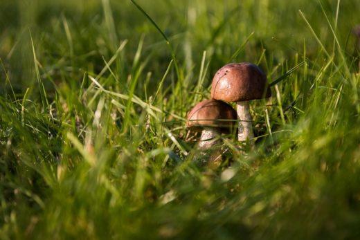 В продаже стали появляться первые грибы, поэтому специалисты управления Роспотребнадзора по Томской области напоминают о правилах безопасности при сборе и приготовлении грибов