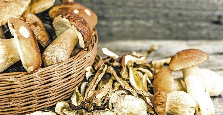 Житель Томской области украл почти 90 кг сушеных грибов