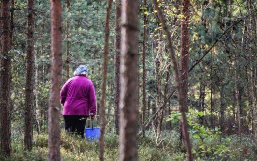 В Литве пробуждается природа, распускаются первые цветы, появляются листья. Природа щедра и к грибникам: дзукийцы уже собирают строчки.