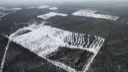 При нынешней системе вырубки леса запасов древесины в Сибири хватит всего на 15 лет, сообщил «Интерфаксу» директор Института леса имени Сукачева Александр Онучин.