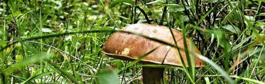 Когда пойдут первые летние грибы в подмосковных лесах в 2019 году, узнала корреспондент РИАМО