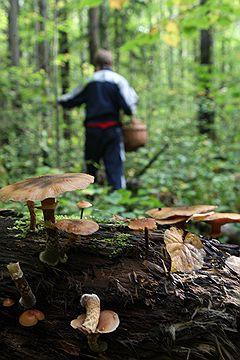 """Тест iПоГрибы: """"Ощущение, что я не грибы собираю, а радиацию ищу"""""""