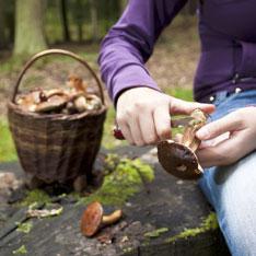 Американский писатель Ахил Шарма написал для The New York Times статью о своих путешествиях по России в поисках грибов.