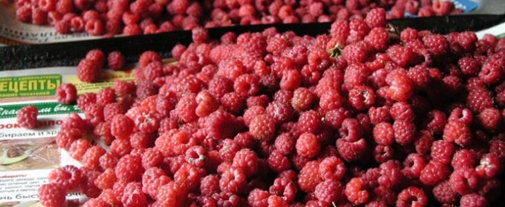 В июле в деревне начинается тонкая дипломатическая игра на почве сбора ягод, повторяющаяся каждый год.
