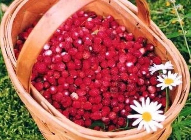 Урожайное лето