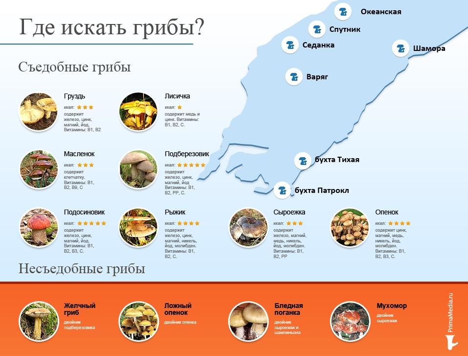 Шампиньоны, сыроежки, грузди можно найти как в городе, так и в пригороде в Приморском крае