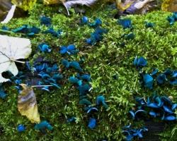 Казанец Владимир Демидов обнаружил на Голубых озерах под Казанью в районе купален экзотические ярко-голубые грибы