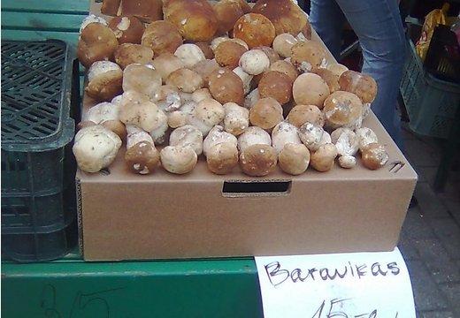 DELFI Reporter: Первый урожай белых грибов для богатых гурманов