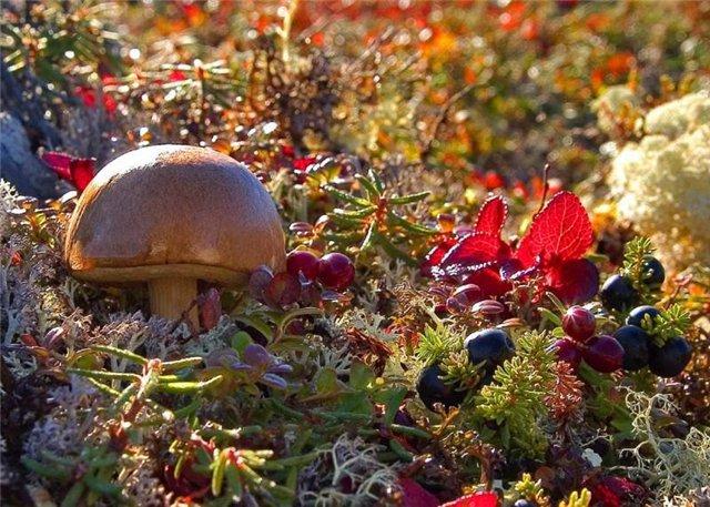 картинки грибы и ягоды