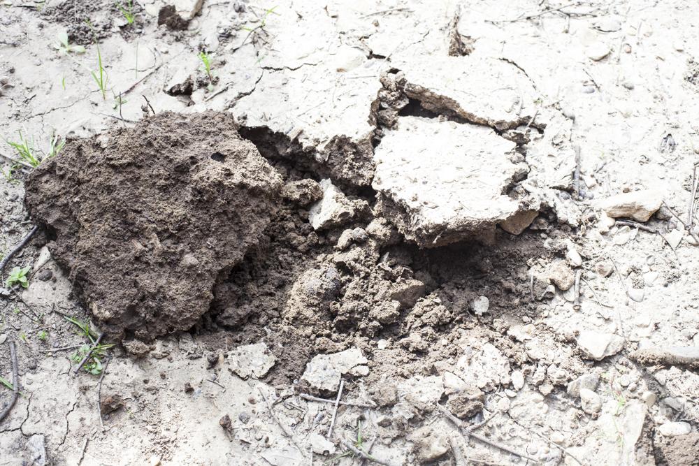 Почвы вокруг Риранша бедные и щелочные — идеально для трюфелей