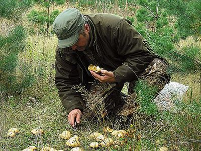 В случае отравления грибами незамедлительно обращайтесь за медицинской помощью