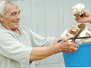 Ставропольцы травятся грибами, причем не только ядовитыми