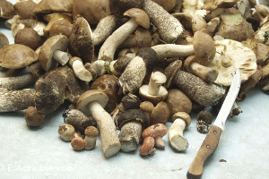 В Петербурге бабушка поела грибочков из Китая и попала в реанимацию