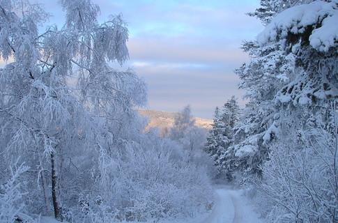 Прогноз: На Украине холод продержится до апреля, а лето придет в мае