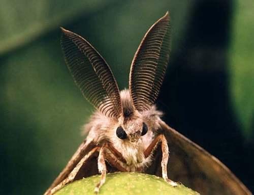 Тюменские леса защитят от вредителей при помощи пестицидов