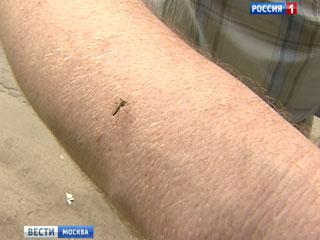 В этом году, по словам энтомологов, сама природа на стороне роя кровососов. Область заполонил, так называемый лесной комар