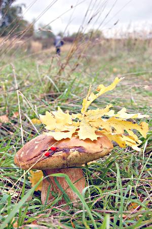 Праздник грибника