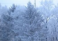 Народные приметы: холодный январь - поздние грибы