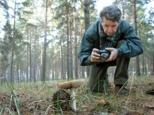 Новгородские ученые нашли несколько редких видов грибов, неизвестных ранее