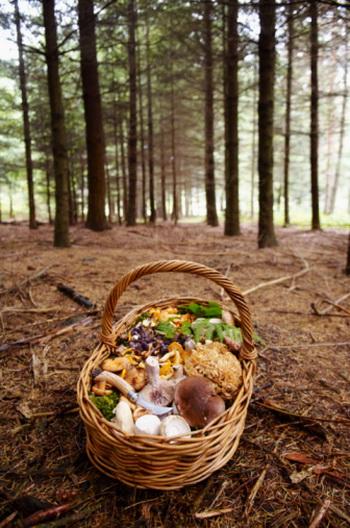 На протяжении 5000 лет грибы с противоопухолевыми свойствами пользовались популярностью на Восток