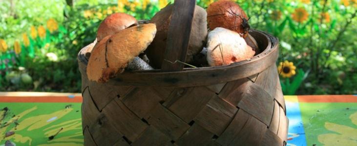 Известно, что грибники люди азартные. Идея поиска не оставляет их даже по возвращении из леса в город: глаза пытливо, но тщетно шарят по асфальту в надежде найти заветный гриб.