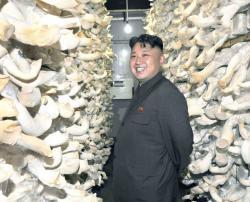 Северокорейский фермер изобрел способ, который позволяет выращивать грибницы общим весом 20 кг