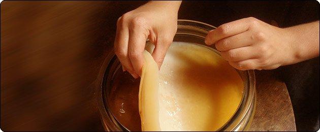 Чайный гриб называют его по-разному: морской гриб, японский гриб, маньчжурский гриб, японская губка, японская матка, чайная медуза, чайный квас.