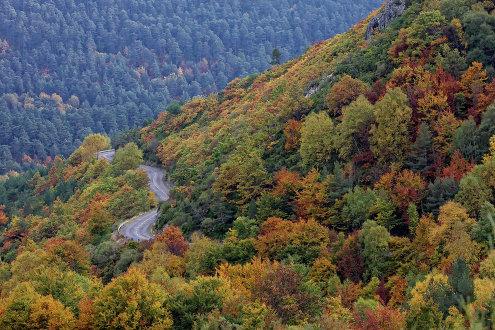 Осенний лес в Пуэбла-де-Лильо в Испании