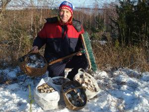 Кировчанин в ноябре собрал пять ведер рыжиков под снегом