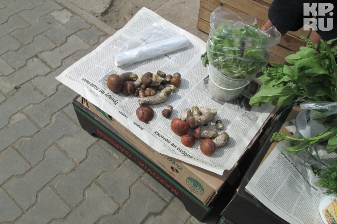 В Сыктывкаре появились первые грибы на лотках