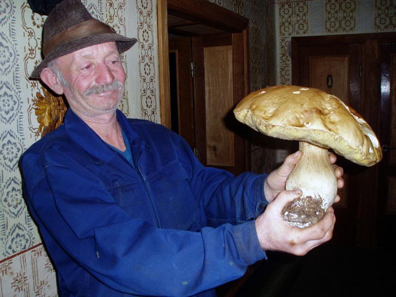 Житель Межгорского района, 58-летний Федор Тарахонич (на снимке), в эти ноябрьские дни, когда уже дали о себе знать первые заморозки и вот-вот выпадет снег, принес домой полную корзину первосортных белых грибов.