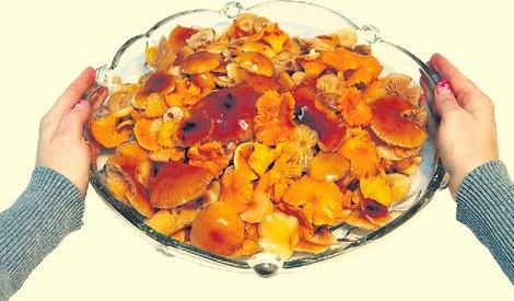 В минувшую субботу в лесу Пылвамаа энтузиасты «тихой охоты» набрали целую корзинку грибов. После того как грибы были разобраны и почищены, их осталось около двух-трех литров.
