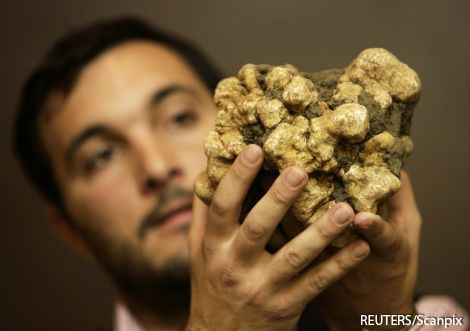 В Латвии можно успешно выращивать трюфеля