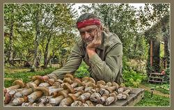 Соседние регионы применят томский опыт заготовки ягод и грибов