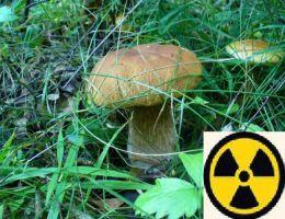 Из Чернобыльской зоны пытались вывезти 130 кг грибов