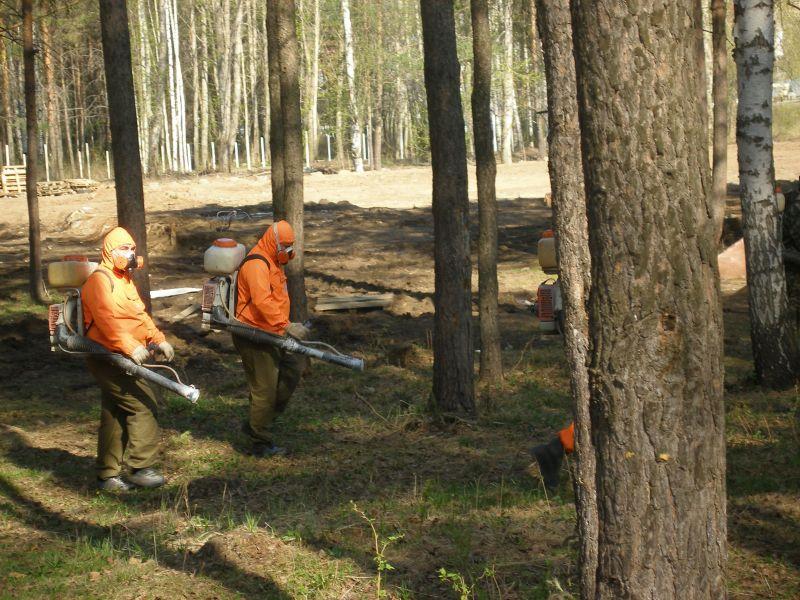 В Волгограде начинается обработка лесов от вредителей
