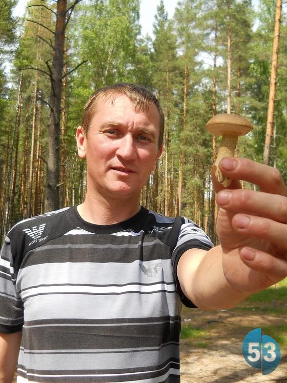 Обычно в июне первыми появляются сморчки, а подберёзовики в Новгородской области вырастают к концу лета или осенью.
