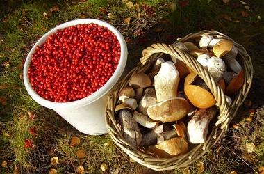 Украинский бизнесмен, чтобы не платить налоги, продавал грибы и ягоды сам себе