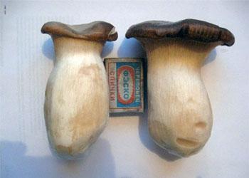 Для амурчан вырастят экзотические грибы