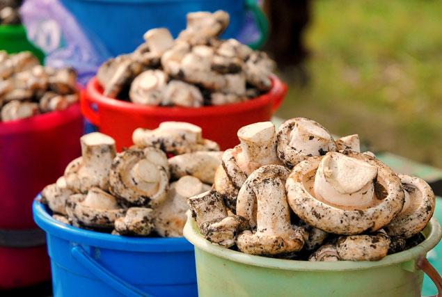 Полноценный грибной сезон уже открыт Фото: Константин НАГОВИЦЫН