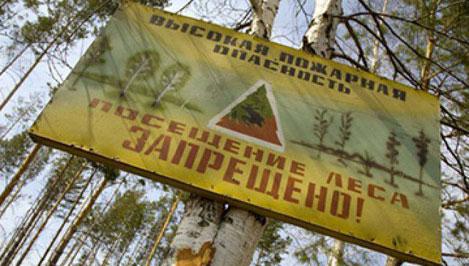 В трех районах Тверской области введен запрет на посещение лесов