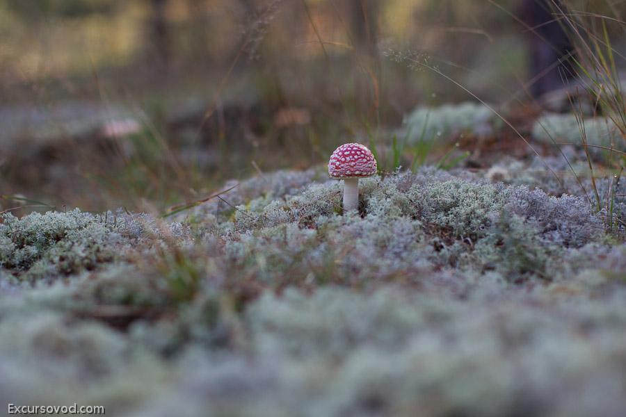 Про путешествия и не только: грибные места
