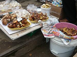 Опытные лесники в Кировской области ищут грибные места по аистам