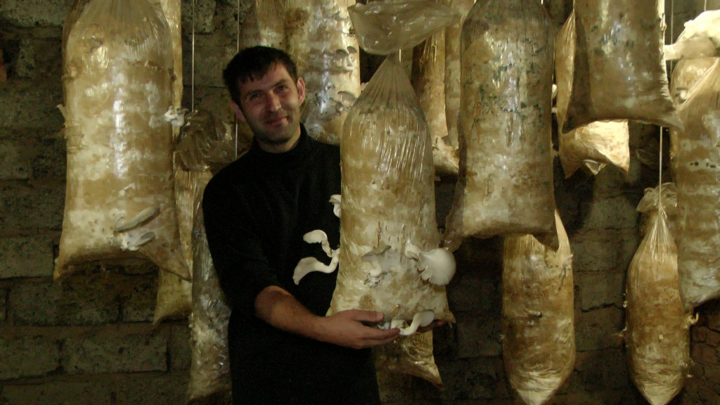 В Крапивинском районе начнут круглогодично производить грибы вёшенки