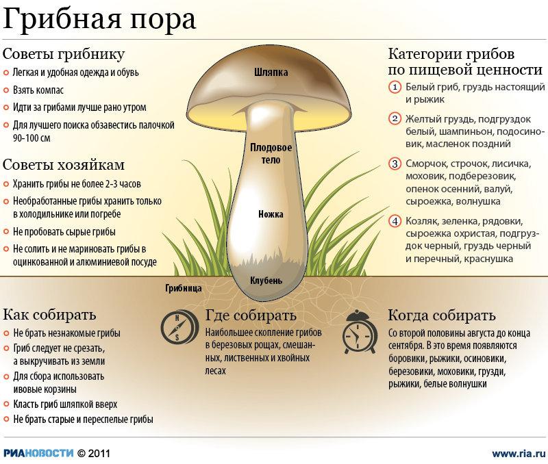Советы грибникам