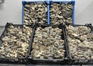 Предпринимательницы Иссык-Куля начали экспорт грибов в Германию