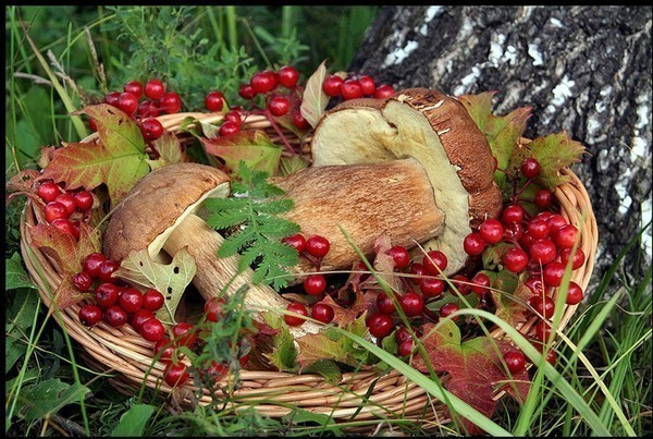 Жители Томской области могут потерять миллиард рублей из-за неурожая ягод и грибов