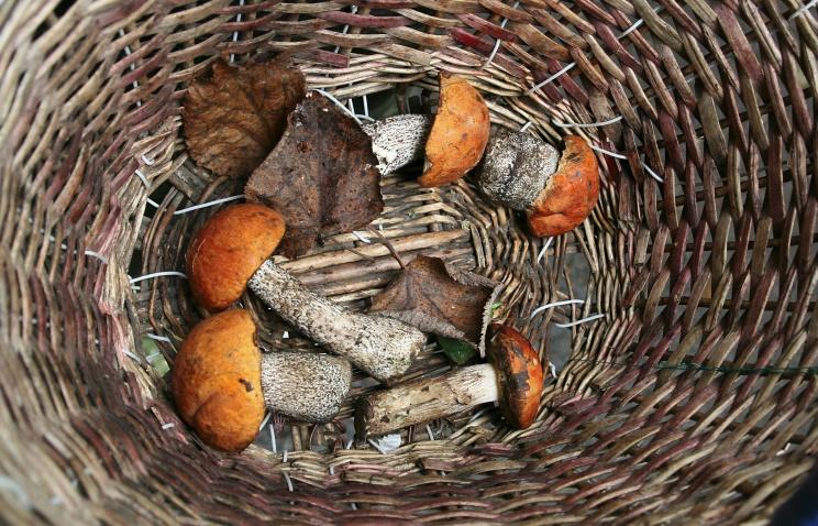 Гидрометцентр Петербурга: этим летом будет мало грибов и ягод